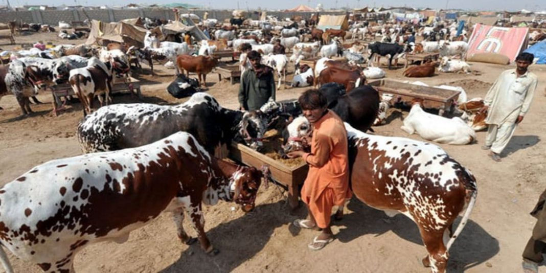 Government has banned the setting up of cattle markets due to high rise of COVID-19 cases.