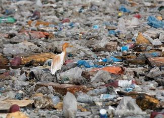 Sindh government renewed the contract of a Chinese firm to collect municipal trash from Karachi.