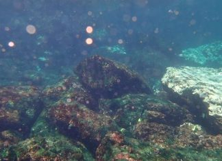 For the first time coral bleaching reported earlier this month near Pakistan's Churna Island.