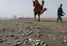 Karachi beach is destroyed due to marine pollution.