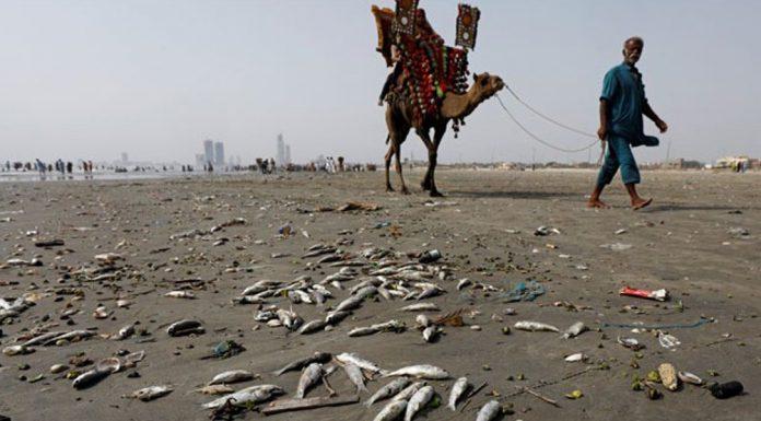 Karachi beach is destroyed due to marine pollution.