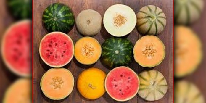 Magical advantages of watermelon and melon seeds.