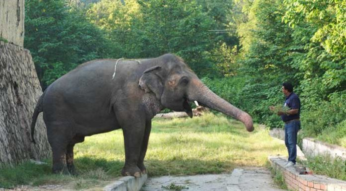 Pakistan's only Asiatic elephant Kaavan is flying off to Cambodia.