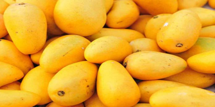 Pakistan is Now Introducing Sugar-Free Mangoes for Diabetics